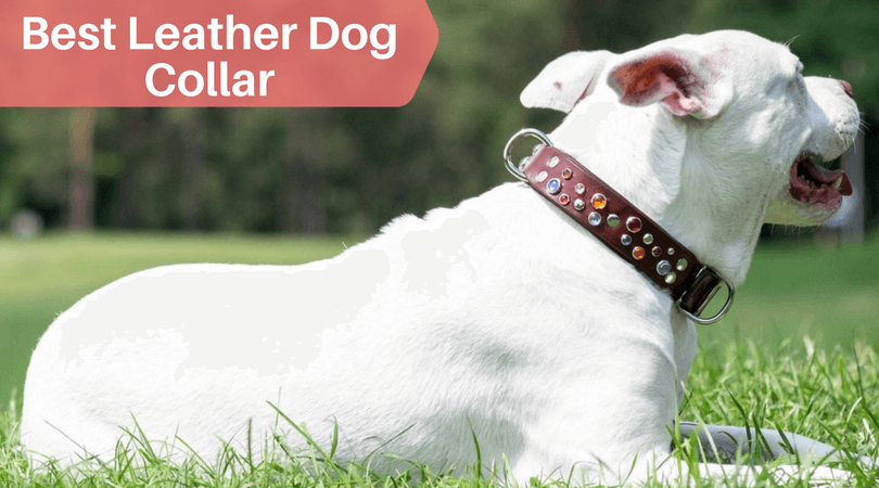 Best Leather Dog Collars for Big Breeds (1) (1)