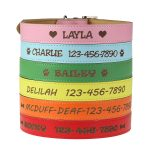 Personalized-Dog-Collar