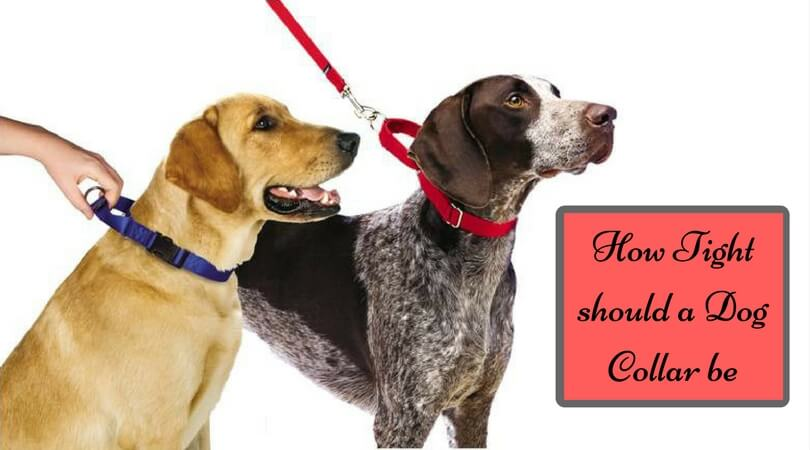 Photo of How Tight should a Dog Collar be – Know Best Size for Dog