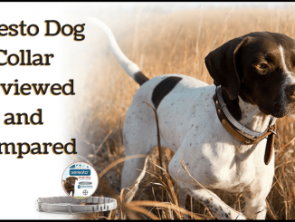 Seresto Dog Collar Reviewed and Compared