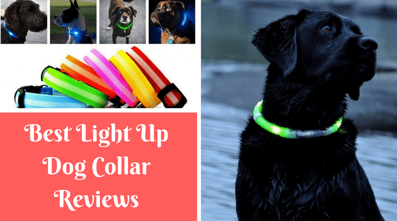 Photo of Best Light Up Dog Collar Reviews of 2020 | Top LED Collars
