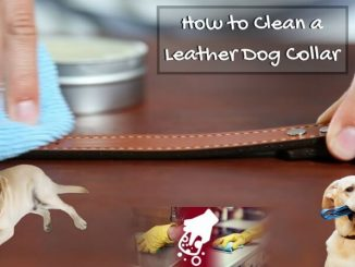 How to Clean a Leather Dog Collar