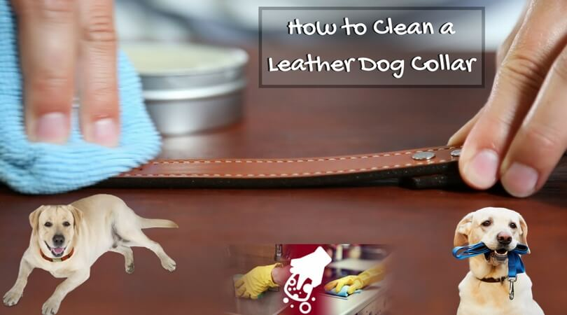 Photo of How to Clean a Leather Dog Collar: Try all Methods Now!!