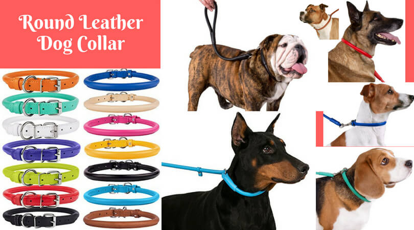 Photo of Best Rolled Leather Dog Collars and Leashes | Top Reviews of 2020