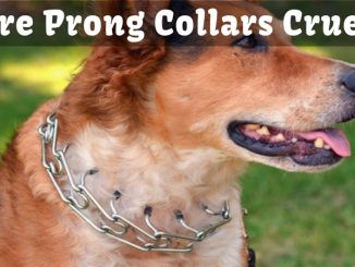 Are Prong Collars Cruel