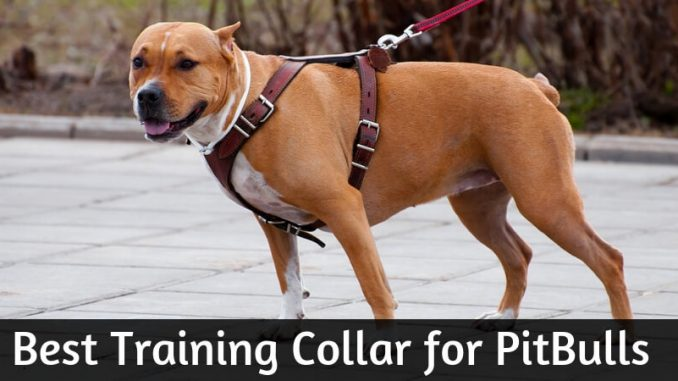 Best Training Collar for PitBulls
