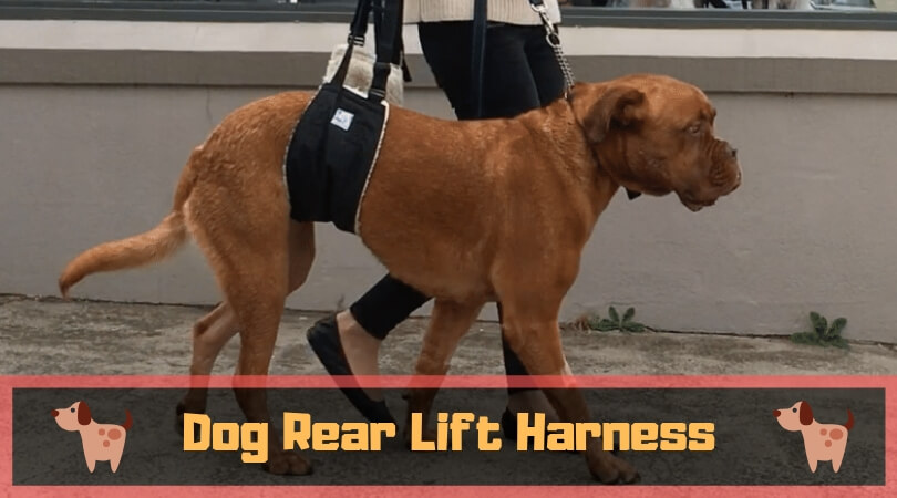 Photo of Dog Lift Harness Systems for Handicapped Pets – Sling Harness of 2020