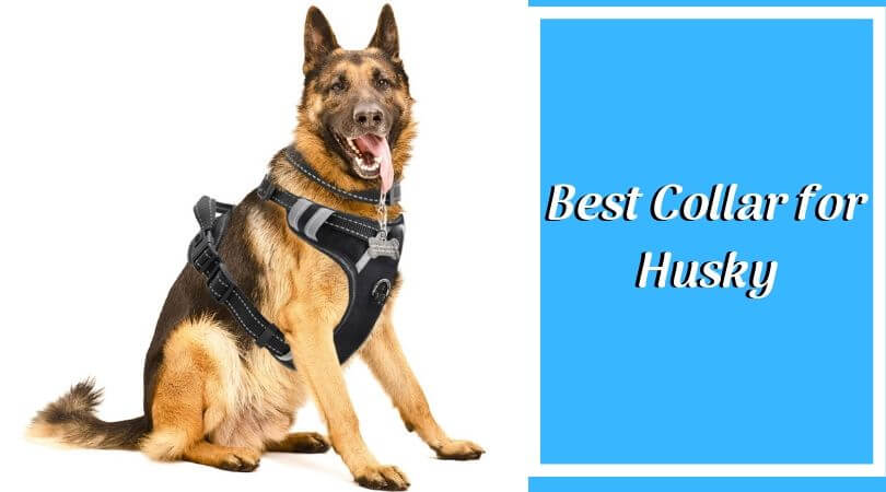 Photo of Best Collar for Husky – Top Reviewed Siberian Husky Harness of 2020