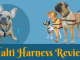 Halti Harness Review