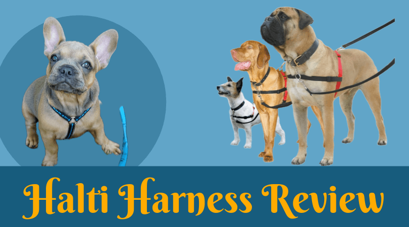 Photo of Halti Harness Review – Know More about the Best no Pull Dog Harness