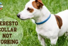 Photo of Seresto Collar not working – Here's what you should do!