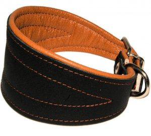 Wide Padded Tapered Dog Collar